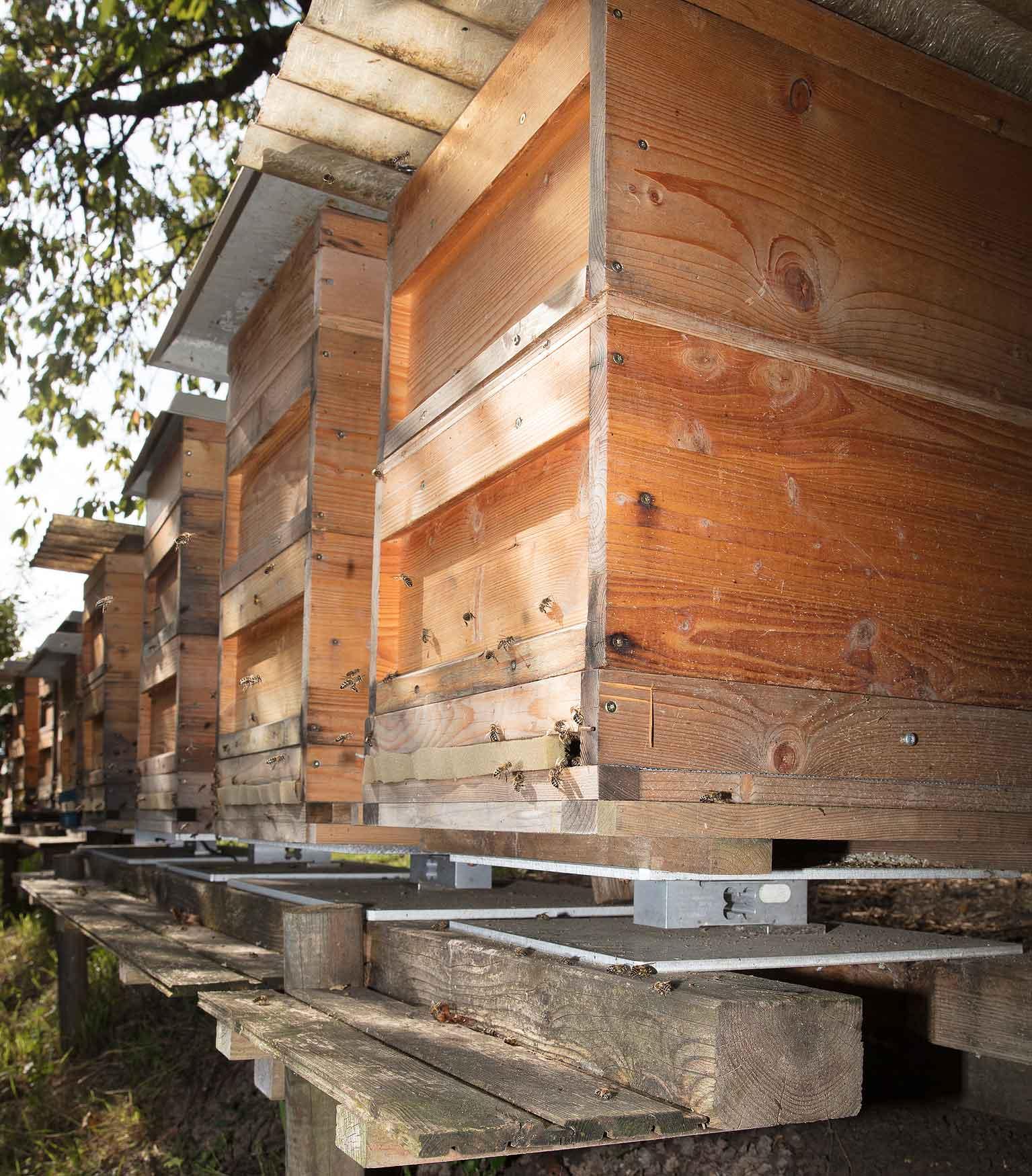 Balanza para colmenas debajo de una colmena - HiveWatch