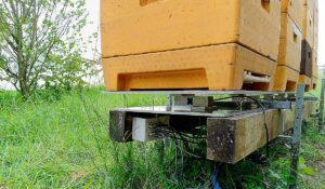 Cómo ahorrar dinero con la balanza de colmenas HiveWatch