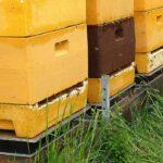 colmenas sobre báculas de colmenas de Hivewatch
