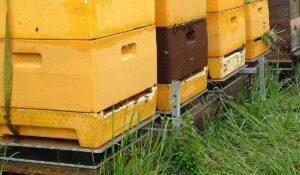 Evita el robo de colmenas con las alarmas de la balanza para colmenas