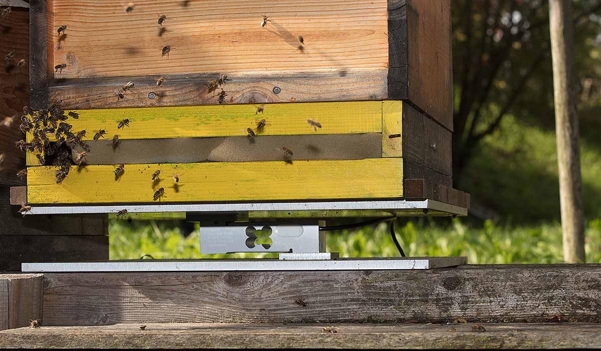 soporte de la balanza para colmenas de Hivewatch