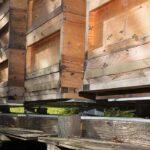 colmenas sobre básculas digitales de Hivewatch