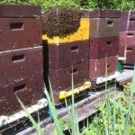 Colmenas montadas sobre básculas digitales de monitorización Hivewatch